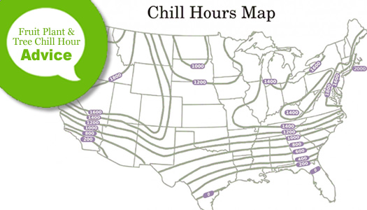 What Are Chill Hours For Fruit Plants & Trees?