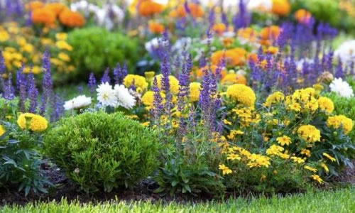 How To Prevent and Control Weeds in a Flower Bed Garden
