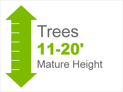 Trees 11'-20' Height
