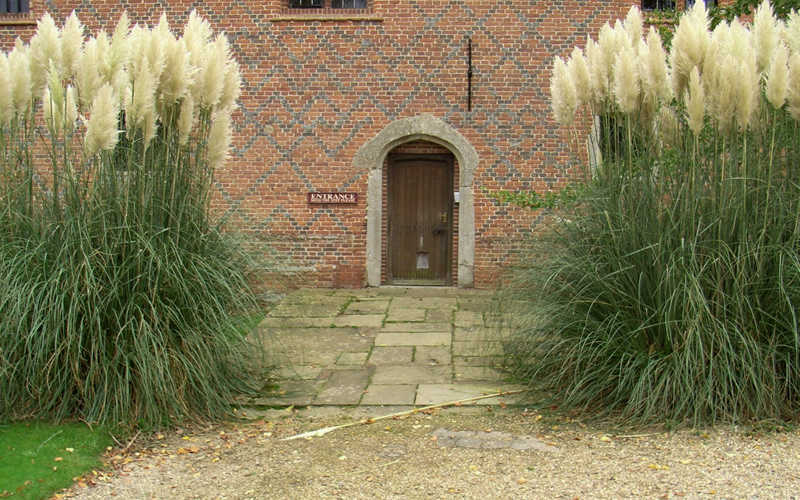 Buy White Pampas Grass For Sale Online From Wilson Bros