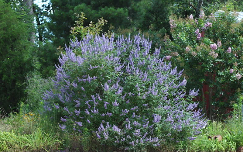 Vitex for sale