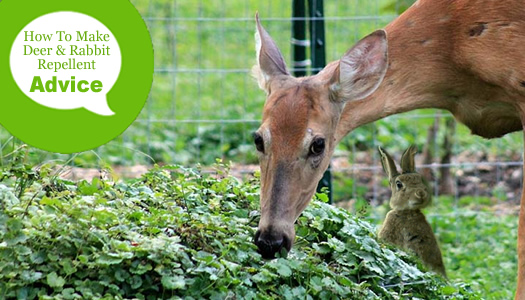 Make Homemade Deer Rabbit Repellents, How To Keep Deer And Rabbits Out Of Vegetable Garden