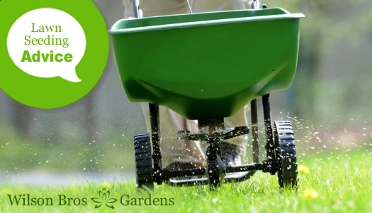 How To Plant A New Lawn Using Seed