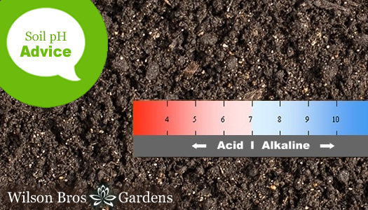 About Soil pH And How To Test And Change It