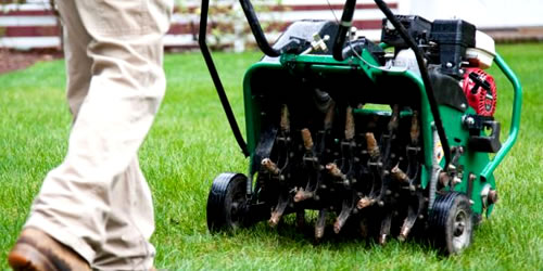 How To Plant or Overseed a Fescue Lawn