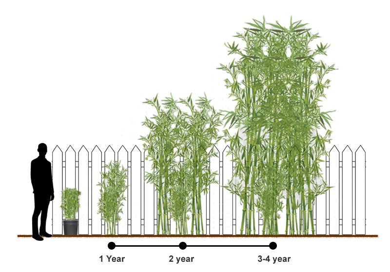 How Nurseries Propagate And Grow Bamboo Plants Wilson Bros Gardens