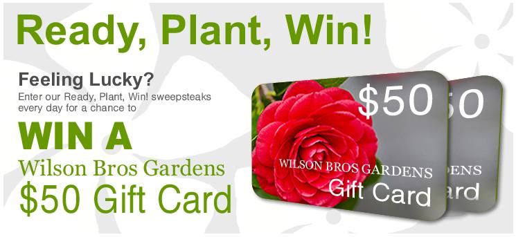 Enter Weekly To Win a $50 Wilson Bros Gardens Gift Card