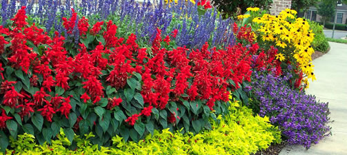 Flower Bed Design Tips and Ideas