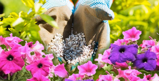 How To Fertilize and Water Annual Flowers and Bedding Plants