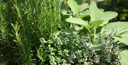 How To Fertilize and Water Herb Plants