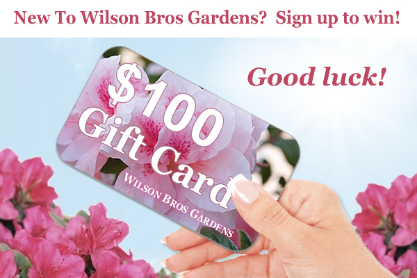 Contest - Win A $100 Gift Card!