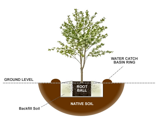 How To Plant & Grow Pecan Trees from the Experts at Wilson Bros ...
