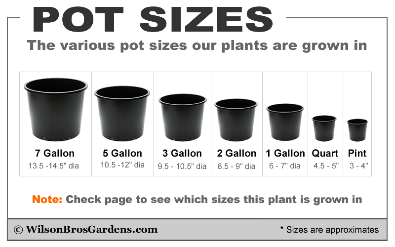 Plant Sizes Shipped By Wilson Bros Gardens