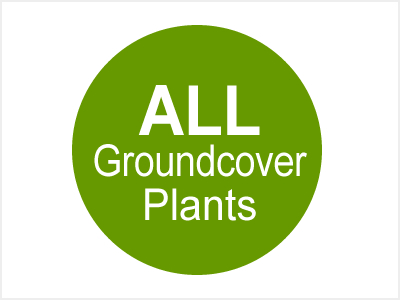 All Groundcover Plants