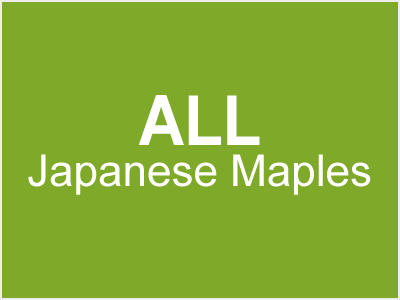 All Japanese Maples
