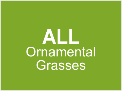 All Ornamental Grasses