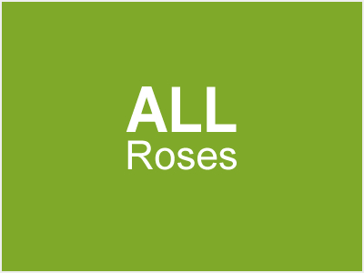 All Roses