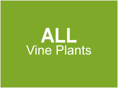 All Vine Plants