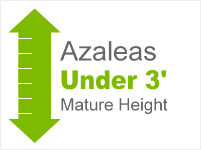Azaleas Under 3' Mature Height