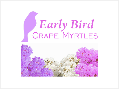Early Bird Crape Myrtles