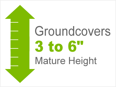3-6 Inch Height Groundcovers