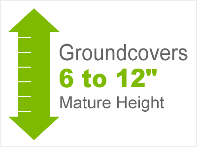 6-12 Inch Height Groundcovers