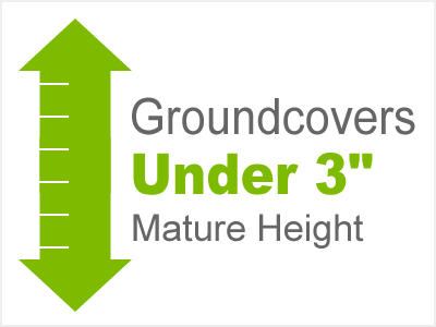 3 Inch and Under Groundcovers