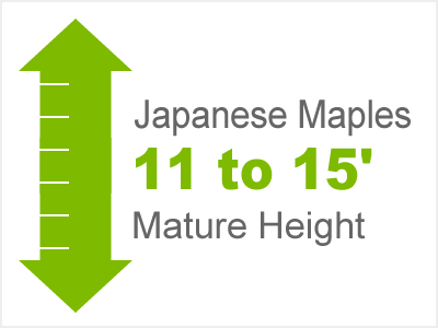 11-15' Mature Height