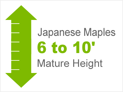 6-10' Mature Height