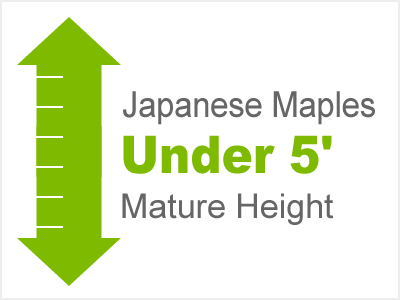 Under 5' Mature Height