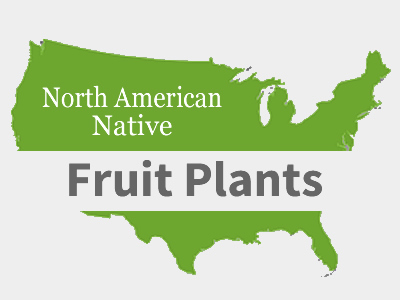 Native Fruit Plants