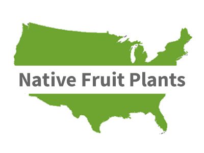 North American Native Fruit Plants