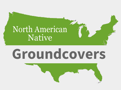 Native Groundcover Plants