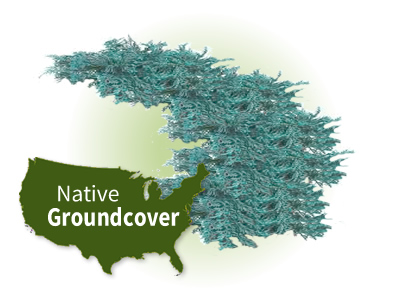 North American Native Groundcovers
