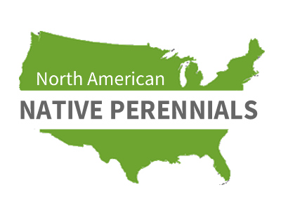 North American Native Perennials