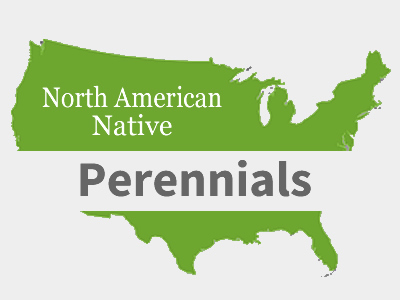 Native Perennial Plants