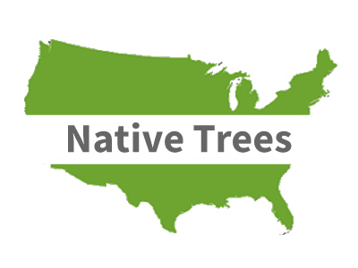 North American Native Trees
