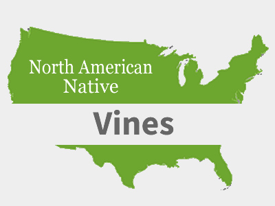Native Vines
