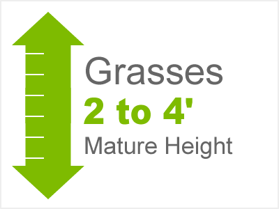 Grasses 2 to 4' Mature Height