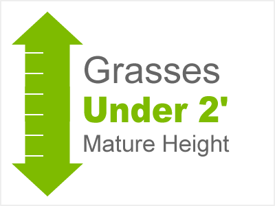 Grasses Under 2' Mature Height