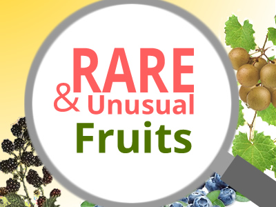 Rare Fruit Plants