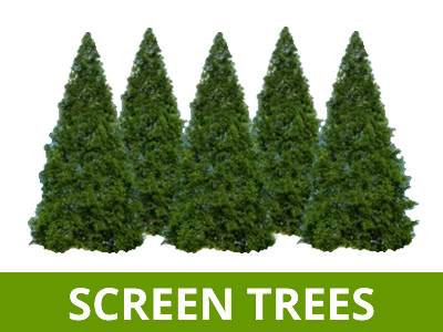 SCREEN TREES