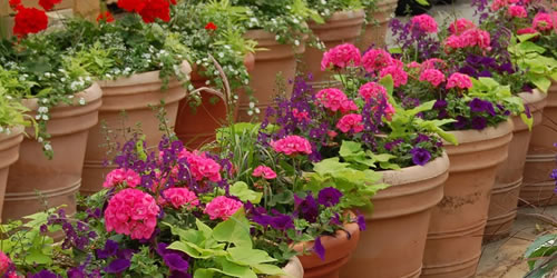 Container Flower Garden Design Tips and Ideas