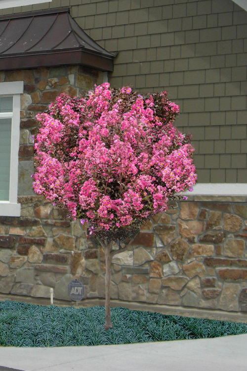 Most Common Pruning Mistakes North