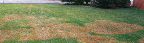 Indentifying and Controlling Lawn Diseases