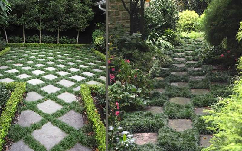 Dwarf Grasses Landscaping Buy kyoto super dwarf mondo grass ophiopogon plants for sale online between stones in the landscape it also serves well as a soil cover in container gardens especially nice beneath japanese maples more details below workwithnaturefo
