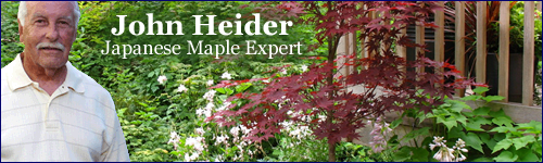 How To Plant A Japanese Maple In A Pot, Planter or Container
