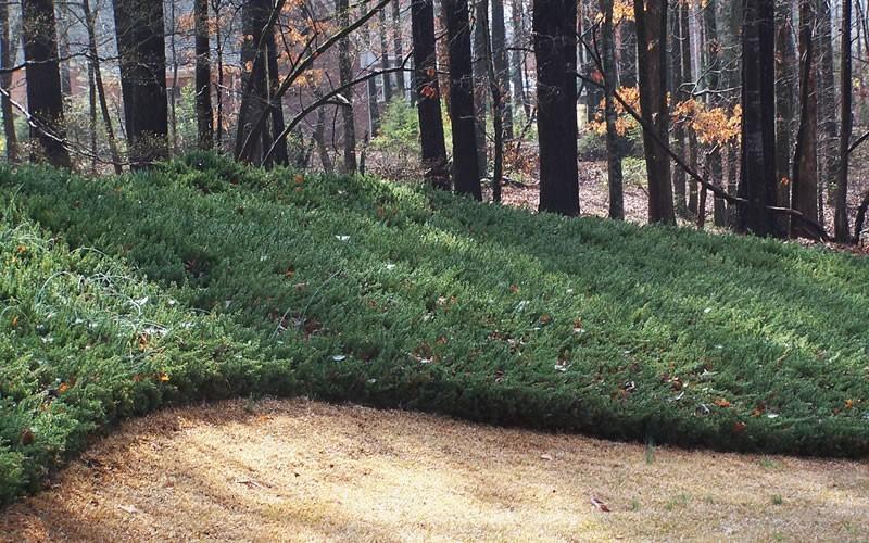 Shade Hillside Landscaping