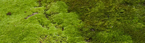 How To Kill Moss in a Lawn