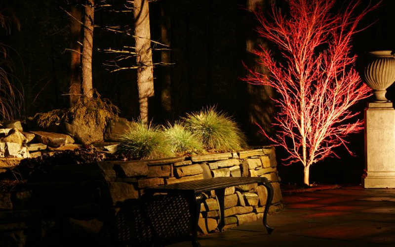 Add ... & Buy Sango Kaku Coral Bark Japanese Maple For Sale Online From Wilson ...
